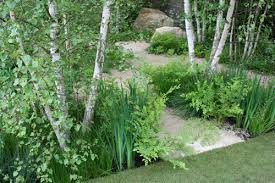 Small Picture Silver birches ferns and irises beautiful planting by garden