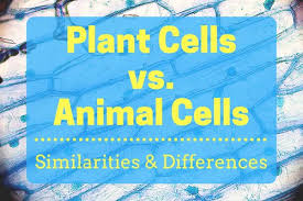 Comparing Animal And Plant Cells Venn Diagram Plant Cells Vs Animal Cells With Diagrams Owlcation