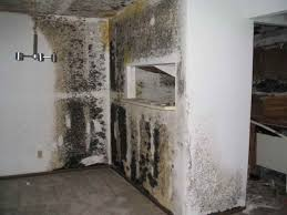 toxic black mold badge com ba