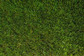 artificial turf texture. Synthetic Turf Colors. Kentucky Blue 75 Artificial Texture