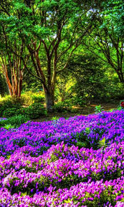 Purple Garden Mobile Wallpaper ...