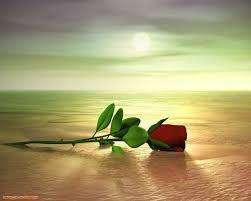 Resultado de imagen para rosas sin espinas