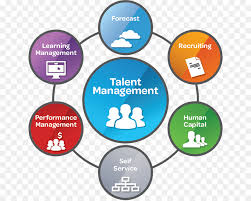 Talent Management System Talent Management System Stambaugh Ness Business Business Png