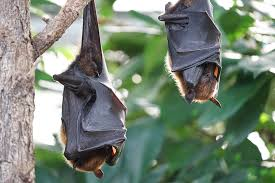 Image result for bat images