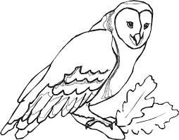 Small Picture Owl Face Outline Drawing Owl Face Drawing special Coloring Pages