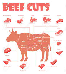 Different Cuts Of Beef Chart Vector Beef Cuts Chart And Pieces Of Beef Used For Cooking Steak