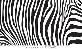 Zebra Patterns Fascinating Zebra Pattern Images Stock Photos Vectors Shutterstock