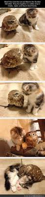 1000 images about Cute Animals 29 on Pinterest
