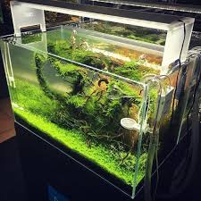 ada cube garden 60p with aquasky moon and twinstar lovely fresh setup aquariumplants adahungary aquascaping natureaquarium greenaqua plantedtank