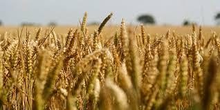 How Can We Ensure Global Food Security Debating Europe