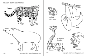 A coloring page set and a colored animal set include a jaguar, a poison dart frog, a sloth, a snake, a tapir, and a toucan. Amazon Jungle Or Rainforest Animals Free Printable Templates Coloring Pages Firstpalette Com