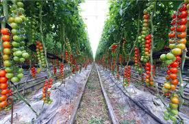 Home Vegetable Garden Design Immense Ideas Cofisem Co \u2013 Modern Garden