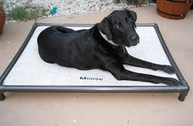 dog incontinence bed. Delighful Incontinence 5 Tips For Life With An Incontinent Dog Blog Kuranda Beds  Incontinence Bed