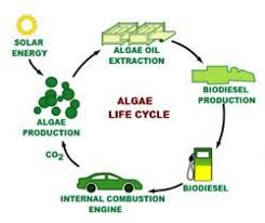 Biodiesel Production Chart Algae As Energy A Look To The Future Climate Energy And