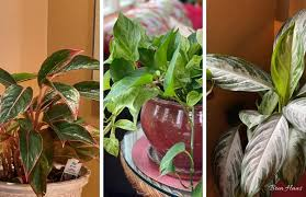 low light houseplants recommendations