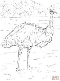 Free Colouring Sheets Australian Animals
