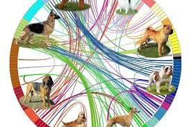 Canine Evolution Chart Researchers Map The Evolution Of Dog Breeds