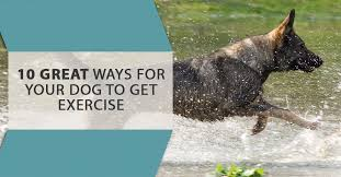 if there s one thing your veterinarian never stops telling you it s that your dog needs his her exercise we all love our dogs and want what s best for