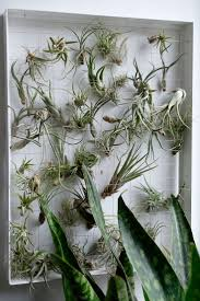 office cubicle plants. Beautiful Office Cubicle Plants Find This Pin And Ideas: Large Size