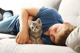 mèo và trẻ em chơi chung