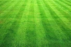 Best 47+ Fresh Cut Grass Wallpaper on ...