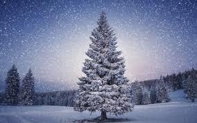 Beautiful Christmas Tree Background Image