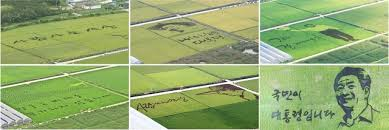 Words With Moo Photo Roh Moo Hyun And Kim Dae Jungs Words In Fields
