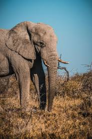 Elephant Pictures [HD]
