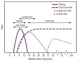 Hep B Serology Chart Prevention Of Hepatitis B Virus Infection In The United