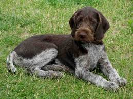cute hunting dogs breeds