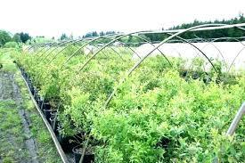 craigslist central illinois farm and garden city farm and garden farm and garden attractive farm and