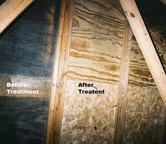 mold in attic. Brilliant Attic Attic Mold Removal For In M