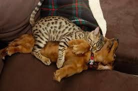 dog and cat sleeping together.  Sleeping 12catssleepingondogs With Dog And Cat Sleeping Together N