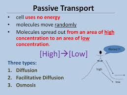3 Types Of Passive Transport Ppt Moving Substances Across Cell Membrane Powerpoint