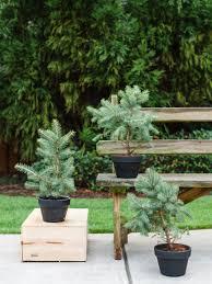Winter Outdoor Flower Pot Ideas  Christmas U0026 Winter Pots Container Garden Ideas For Winter