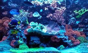 Image result for Benefits Of Professional Aquarium Setup
