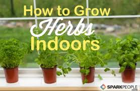 Small Picture How To Grow An Indoor Herb Garden Gardening Ideas