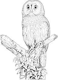 Small Picture Coloring Pages Draw An Owl Es Coloring Pages