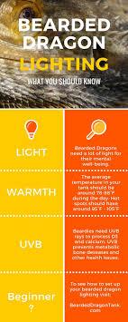 bearded dragon lighting facts more info on beardeddragontank com