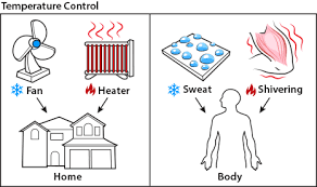 Image result for Homeostasis