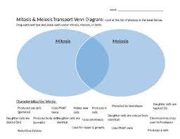 Venn Diagram Meiosis And Mitosis Mitosis Meiosis Digital Venn Diagram