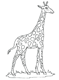 Giraffe Colouring Pages To Print Coloring Pages Best