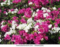 Vines U0026 Climbing Plants  Garden Plants U0026 Flowers  The Home DepotClimbing Plant