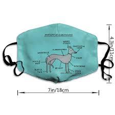 Amazon Com Wecottkerc Unisex Anatomy Of A Greyhound