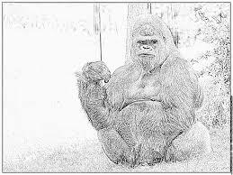 Coloriage Gorille Dos Argente 0566 Hf Imprimer Pour Les Enfants