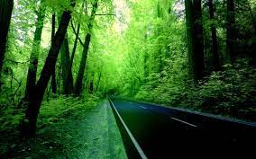 Nature Green Forest Wallpapers - Top ...