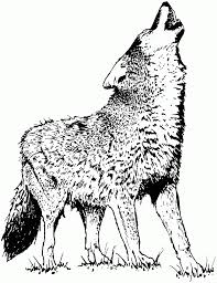 Coloring Pages Free Wolf Head For Kidslip Art Realistic Adults