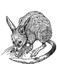 Small Picture Coloring page Rat Bandicoot img 18586