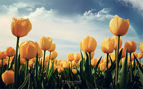 flower wall paper download 20 beautiful flower wallpapers free premium templates