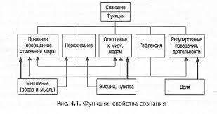 Сознание как высшая ступень развития психики pro psixology ru Функции свойства сознания